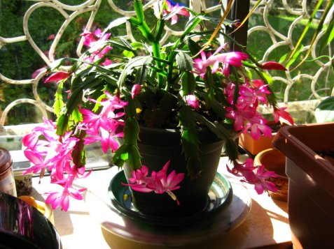 Even my Christmas Cactus rejoiced to all of the above news items