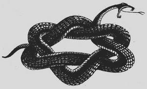 zionist-snake11