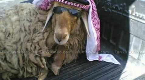 ya-habibi-bakra-eid-funny-goat-600x330